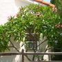 Plant_pics_07_26_09_010