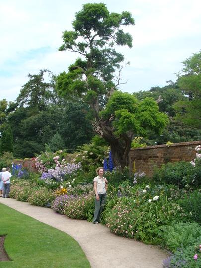 walled Garden - Calke Abbey