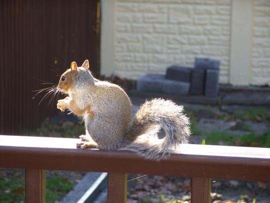 Winter Squirrel...
