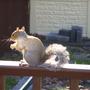Winter_squirrel