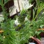 Blueberries_cream_close_up