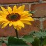 Garden_210709_005