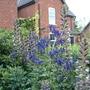 Garden_210709_015