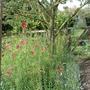 Garden_210709_004