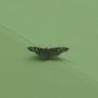 Butterfly, flutter-by......
