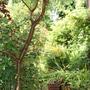 the garden becoming a jungle!