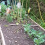 Raised_Bed_20090618.jpg