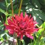 garden_july_003.jpg