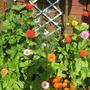 garden_july_017.jpg