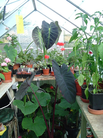A peek in the greenhouse