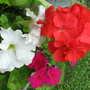 2009_07_28_goy040