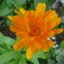 2009_07_28_goy063