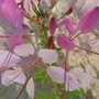 2009_07_28_goy144