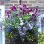 front_garden_7.07.09_024.jpg