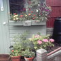 shed window box right
