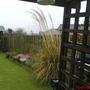 Before the garden re-do (Cortaderia selloana)