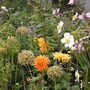 Dahlia, Japanese Anemone and Allium Seedheads