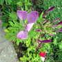 2009_07_28goy_065