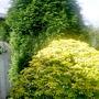 My_garden_3_