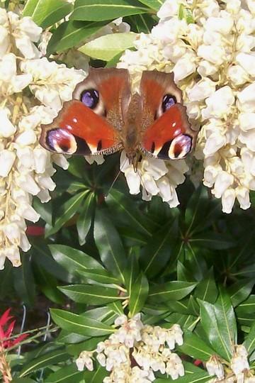 buterfly2.jpg