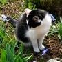 One of our Catz Suzi
