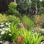 Garden_on_14th_june_09_037