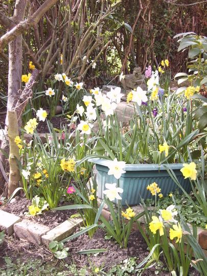 Shady corner and spring bulbs