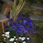 2009_0729april0106