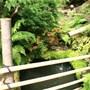 Japanese_garden_at_st_mawgden_065