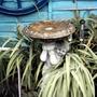 birdbath/fountain