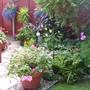 Upper garden (1) in August 09