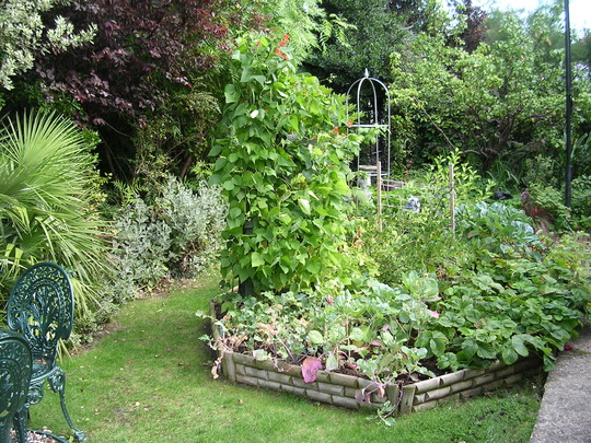My Veg patch in August 09