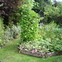 Veg_patch_aug_09