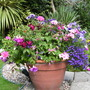 Pot_in_upper_garden_aug_09