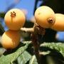 Finca_tropical_botanischer_garten_nispero_1_