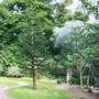 Glendurgan Garden, Falmouth, Cornwall