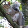 Squirrel....NOT Nutty!