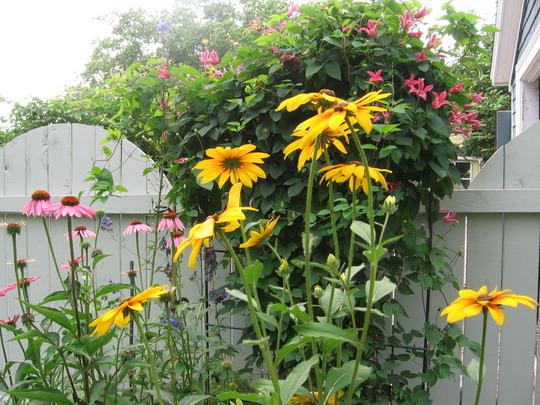 gate grouping (echinacea)