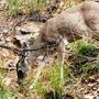 Macro_of_deer