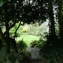 View_through_holly_trees