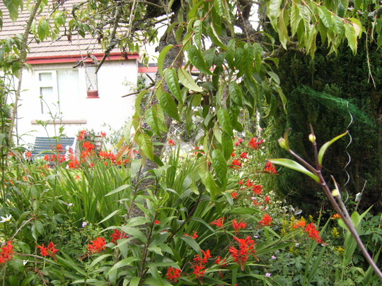 Looking from the back seating area around the Crocosmia