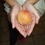 Our First Peach - For Amy