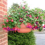 fuschia basket