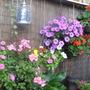 My_garden_010