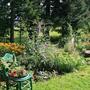 Backyard Border and  Bargain Plant Holder
