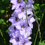 More_flowers_aug_09_006