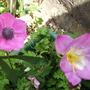 Back_garden_2_005