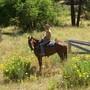 Saddlehorse and wild weeds?