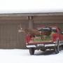 Truck Buck Jump (Odocoileus hemionus)