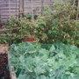 Garden_photo_s_006